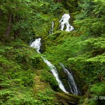 Quinault Rainforest, Olympic National Park