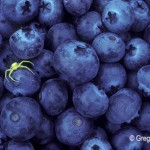 Blueberry time
