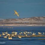 National Wildlife Refuges Anniversary