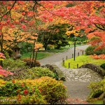 Seattle Area Japanese Gardens in Autumn