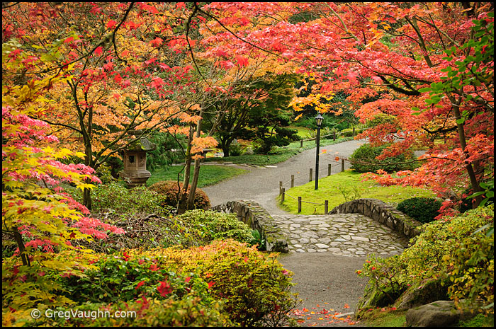 Seattle Area Japanese Gardens In Autumn Wanders Amp Wonders