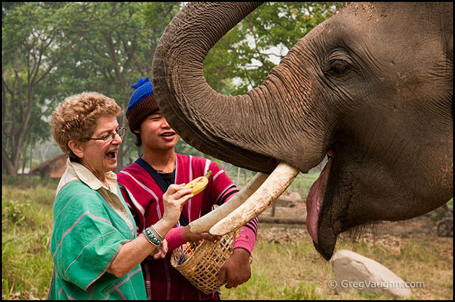 visiting giving banana to elephant