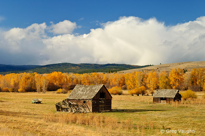 Ranch buildings and cottonwood trees in eastern Oregon.