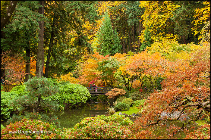 Portland Japanese Garden with fall color