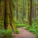 Redwoods Workshop Wrap Up